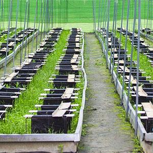 granja de caracoles