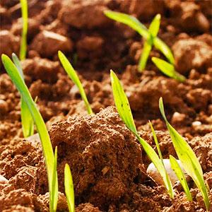 conservación agrícola