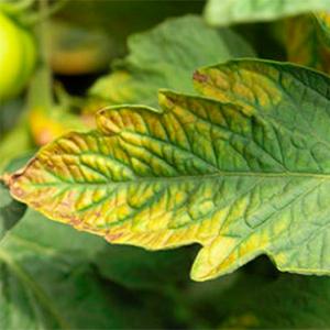 hojas de las plantas